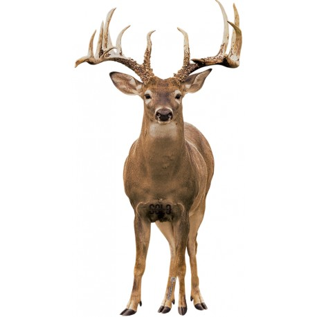 "2D ""WHITETAIL FULL FRONTAL"" ARCHERY TARGET - Solo Targets"