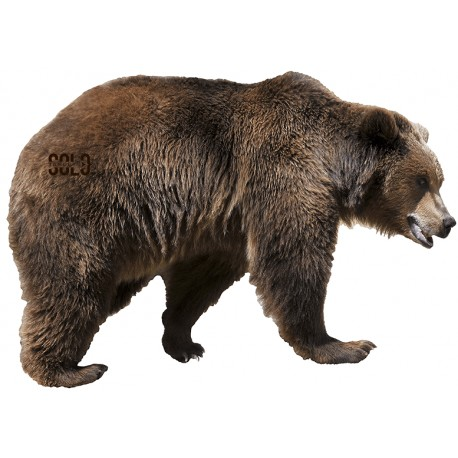 SOLO SKIN GRIZZLY BEAR BROADSIDE